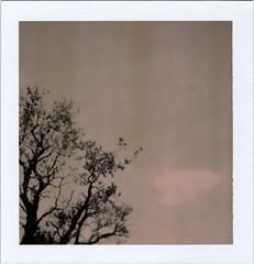 (moominsean) Tags: arizona polaroid ancient alone chocolate grandcanyon dream windswept twisty pinon squareshooter type80 colorpackiifront