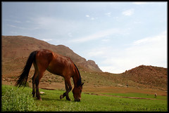 (Saeid Aghaei) Tags: trip travel horse mountain green nature iran mount  range  neyshaboor neyshabour binalood neyshabur neishabour nishapur  neishaboor binalud  binaloud