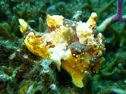 Unique Aquatic Creatures: Rare but Attractive Aquarium Pets
