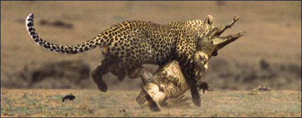 ealeopard118