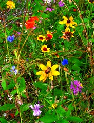 WildFlowers (dlco4) Tags: lakemichigan wildflowers wildflower awesomeshot anawesomeshot colorsinourworld xtremeboquet
