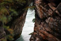 Canadian Rockies - Jasper (HBarrison) Tags: jasper canadianrockies wildlife elk sheep glaciers miligne harveybarrison travel travels worldtravel hbarrison alberta cans2s athabasca canada