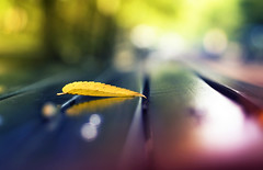 A Little K's  Signature Touch? (Lee_Bryan) Tags: newyork yellow canon bench leaf dof bokeh centralpark inspiredbykthegradientmaster