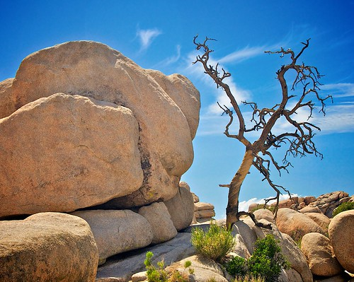 Dead Tree, Joshua Tree National Park