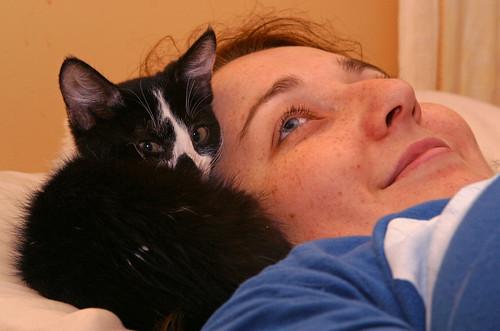 Pillow-kitten
