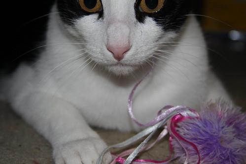 """Squeaky says: """"Mine."""""""