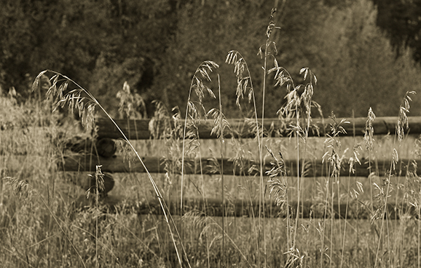 dry grass in the Methow Valley
