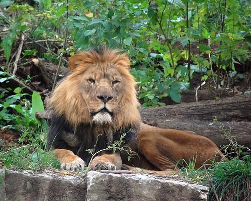 zoo 275