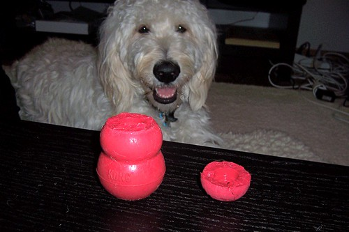 Lacey bit her Kong in half.  Is that Legal?