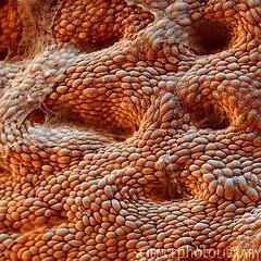 Magen Corpus 700x (schmox) Tags: germany corpus medizin magen reutlingen verdauung ventriculus