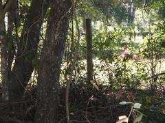 marker beyond fence, W side