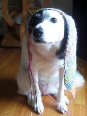 panda and scarf 2.jpg