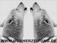 zwei_Heuler