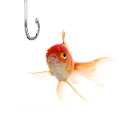 Undecided Fish (Bakh2013) Tags: orange fish canada mouth fishing open looking goldfish surprise expressive surprised hook undecided threat decision