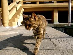 outing(お出かけ) (hamapenguin) Tags: animal cat temple kamakura neko 猫 straycat 鎌倉 ネコ 野良猫 thebiggestgroup anawesomeshot