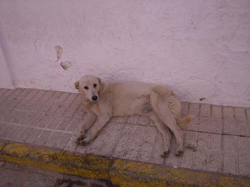 Vida perra