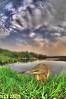 Bird & Landscape (N-S-S) Tags: sunset bird birds landscape nikon kuwait nikkor nasser بحيرة غروب kwt بو طبيعة شروق طير طيور شجر ناصر d2xs قصب kvwc الخصيف الصليهم alsolihem