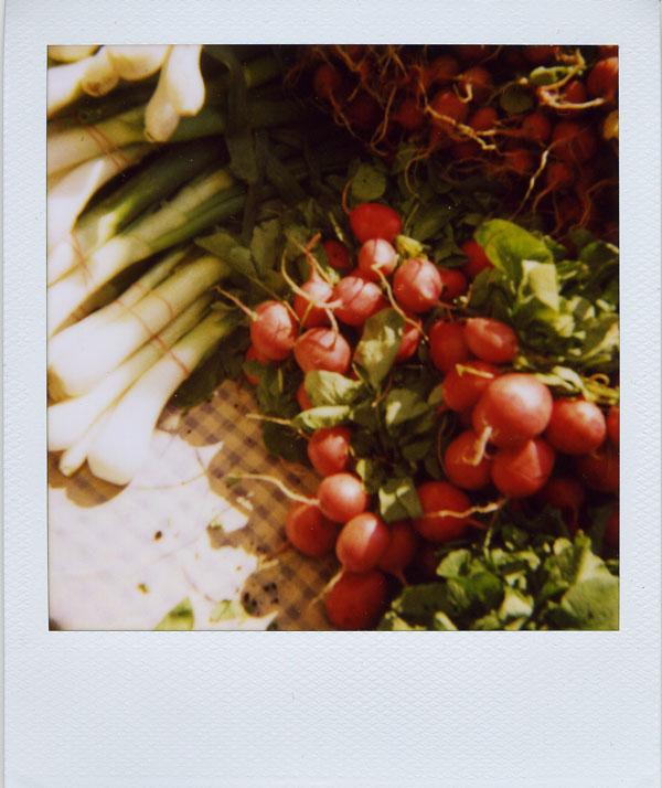may17: radishes