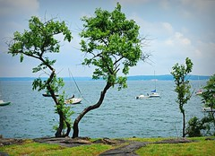 Off Shore (floralgal) Tags: ocean trees newyork beach water boats landscapes seascapes sailboats longislandsound blueribbonwinner larchmontnewyork mywinners abigfave platinumphoto anawesomeshot impressedbeauty citrit