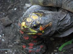 vancouver aquarium turtle