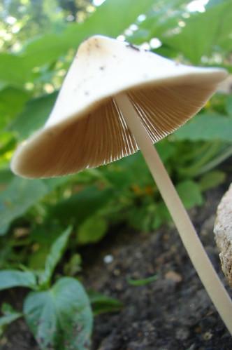Perfect Mushroom