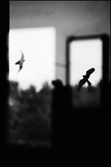 Reflejos (Pablo Latorre) Tags: espaa paisajes naturaleza reflection bird nature landscapes sevilla huelva andalucia frame pajaro marisma wwf doana parquenacional pablolatorre pablografia wwwpablografiacom