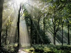Light in the Forest (algo) Tags: trees photography woods topf50 searchthebest topv444 topv222 rays portfolio algo topf100 sunbeams 100f chilternforest 50f visiongroup 200850plusfaves vision100