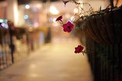 2132/1803*^:z (june1777) Tags: street light portrait flower night 35mm canon eos bokeh f14 snap 1600 e seoul 5d nikkor 35mmf14ais gwanggyo bokehlicious