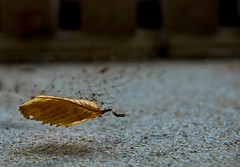 Magic (Orbmiser) Tags: oregon portland leaf nikon magic explore lightroom d80 tamron1750f28 unature tamronspaf1750mmf28xrdiiildsp