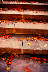 Steps of fall! [EXPLORE] (bynini [slightly away]) Tags: city autumn red urban orange colour rot fall nature leaves yellow stairs germany leaf warm stair seasons natural herbst jahreszeiten natur nikond70s jena treppe gelb stadt farbe stufen treppen stdtisch mywinners