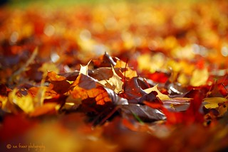 October's the month when the smallest breeze gives us a shower of autumn leaves. Bonfires and pumpkins, leaves sailing down - October is red and golden and brown.