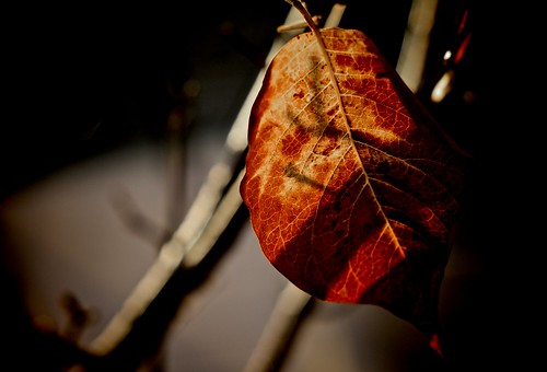 The Dying of Autumn