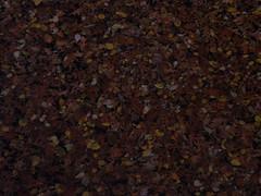 PB090197.JPG (rlg) Tags: november sunday 09 2008 1109 fpr 200811 20081109 olympussp570uz 11092008