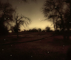 Star Shower (deepintheforestcat) Tags: mood romantic moonshadows starshower moonlitnight takenwoflash naturalandpsstars