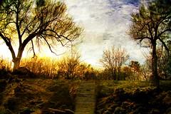 Stairway to Heaven (HappyPlatypus) Tags: trees sunset clouds stairs landscape textures layers naturesfinest abigfave platinumphoto impressedbeauty ultimateshot theunforgettablepictures overtheexcellence goldstaraward damniwishidtakenthat happyplatypusphotography funnelwebtexture