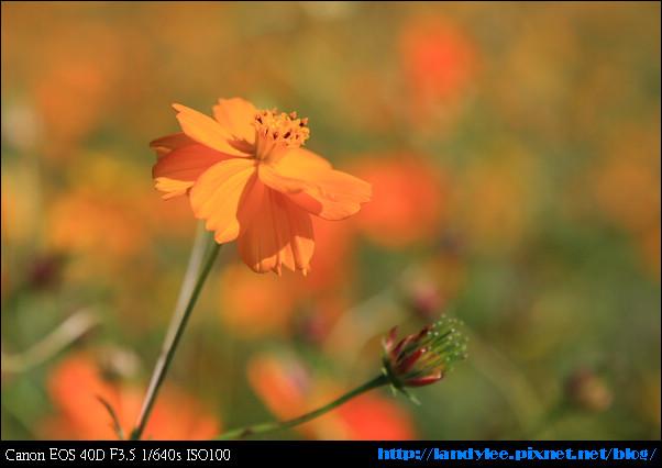 9711-新社花海:Date with Bee_079.jpg