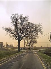 Marano di Castenaso (pierluigi.ricci) Tags: winter tree olympus bologna albero inverno bassa bassabolognese marano castenaso olympuse3 pierluigiricci