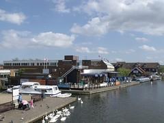 Swans on the Hoveton side of the Wroxham Bridge