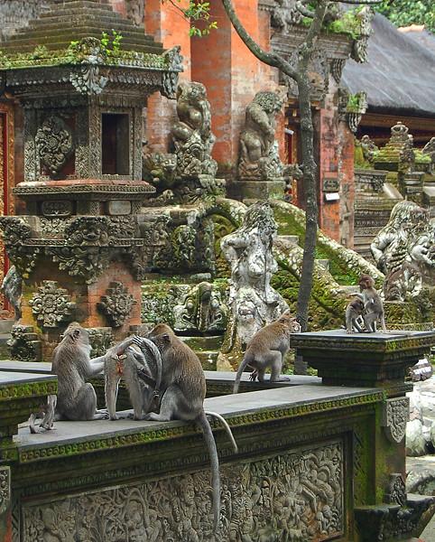 _Bali_monkeys_5_