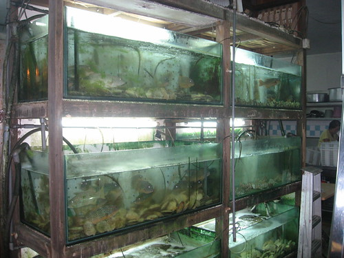 The grimy seafood tanks at Sin Huat