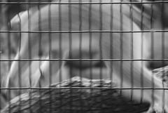DSC_0217 (KInksco) Tags: ocean show sanfrancisco seattle park street new nyc newyorkcity sunset red sea newzealand party summer portrait sky people music sun mountain snow newyork paris mountains rome macro london me nature rock museum night river mexico hongkong scotland photo spring spain nikon san shanghai photos live sydney taiwan tibet yunnan dali chinois chine lhassa tourdumonde chinoises lijianf
