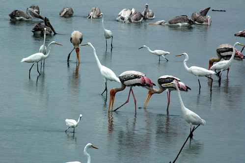 different types of flying animal cranes  photos