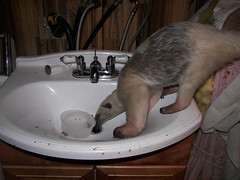 Drinking from the drain