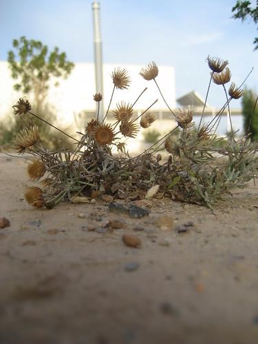 Plantas del Toyo Retamar (Almería)