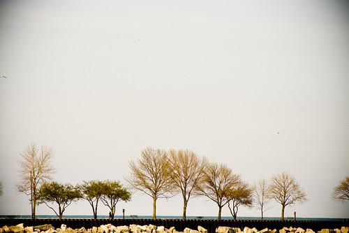 Pier trees