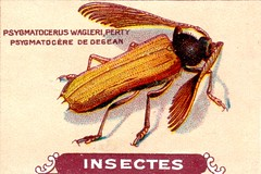 insecte 20