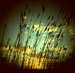 the haunted light (memetic) Tags: sunset sky 120 6x6 grass silhouette clouds mediumformat reeds countryside holga xpro crossprocessed kodak australia victoria story tall e100vs 120n