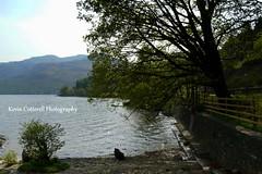 Banks of Loch Lomond (AreKev) Tags: uk tree silhouette landscape scotland nationalpark panasonic trossachs lochlomond tarbet arrocharalps argyllbute dmcfz18 panasonicdmcfz18