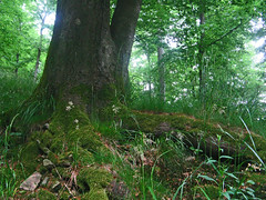 (haikus*) Tags: trees grass forest moss stones