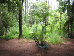 sun chair, abandoned (parttimefarm) Tags: trees nature brasil chair backyard chacara echapora
